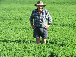 lucerne paddock too long for ideal grazing